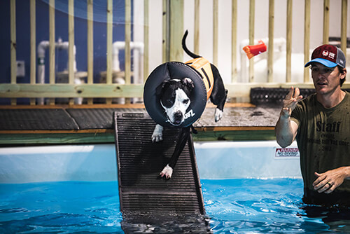 Doggie Swimming Pool, Portland, Maine